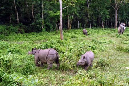 Jungle Safari And Wildlife