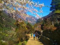 wild flower on Everest